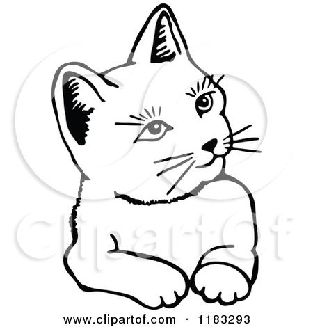 450x470 Cute White Cat Photo Print. Topaz Painting Topaz Fine Art Print