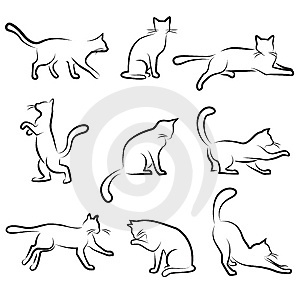 Cat Drawing Outline