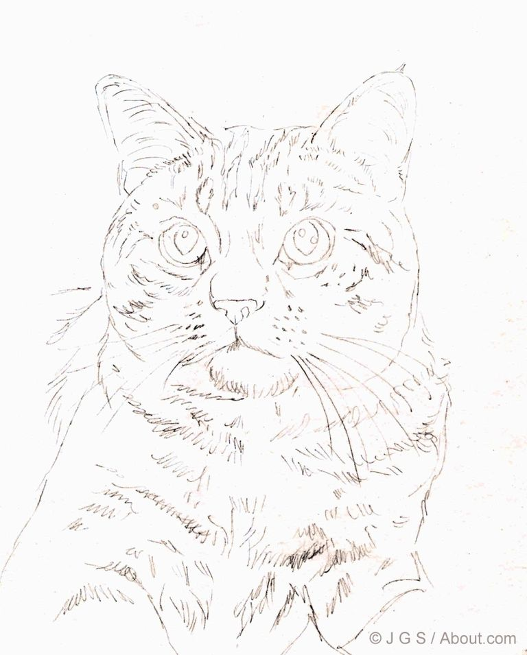 768x955 Draw A Majestic Cat In Colored Pencil Outlines, Colored Pencils