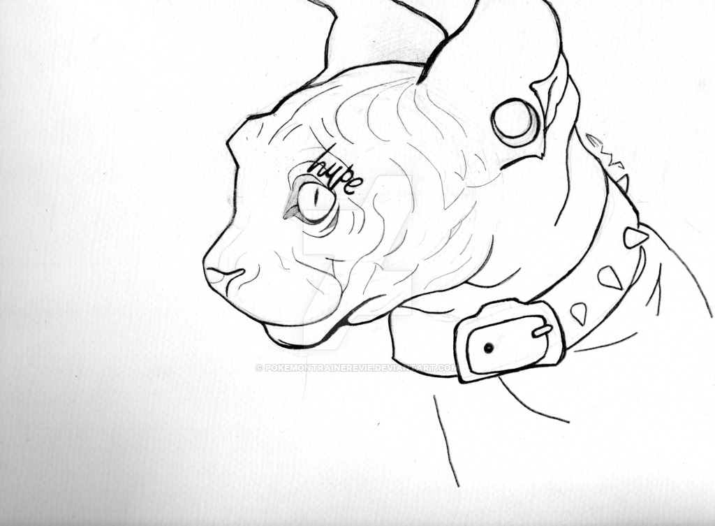 1024x753 Hairless Cat (Outline) By Pokemontrainerevie