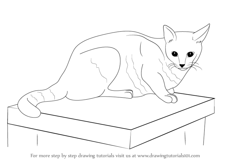 800x550 Learn How To Draw A Cat (Farm Animals) Step By Step Drawing