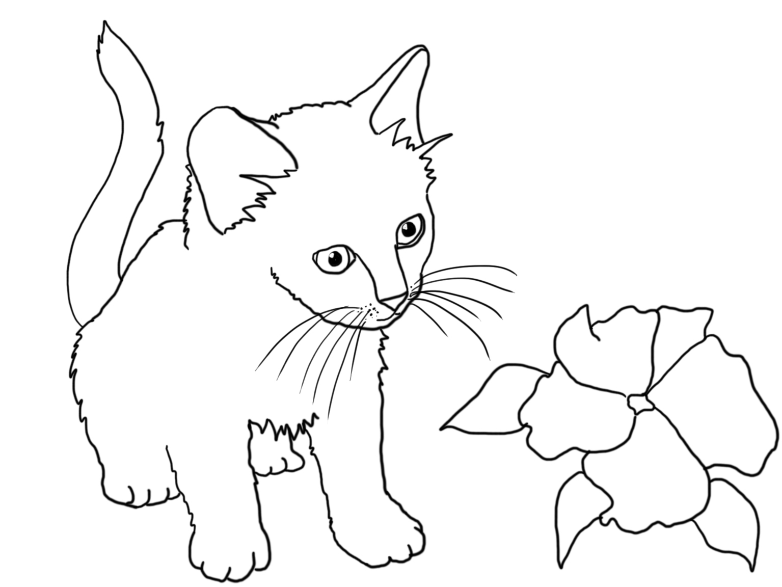 Cat Drawing Pages at GetDrawings.com   Free for personal use Cat ...