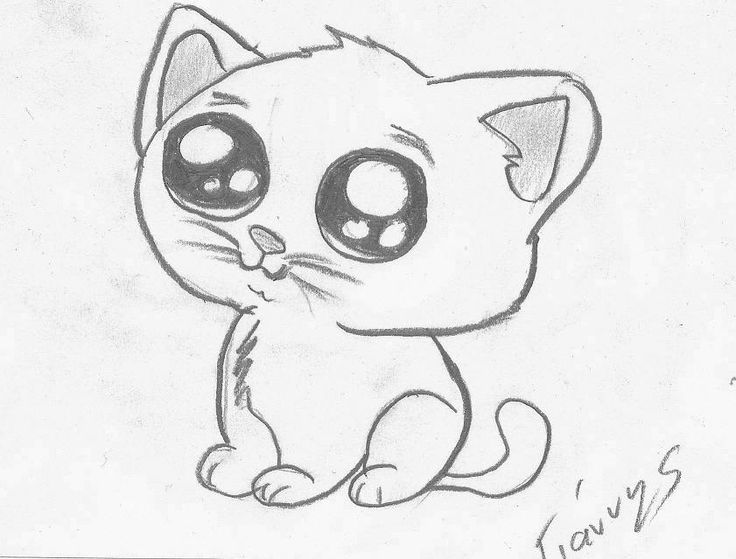 Cat Drawing Picture At GetDrawings