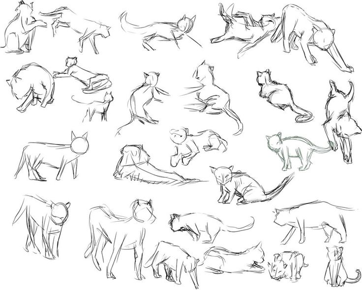 Cat Drawing Poses