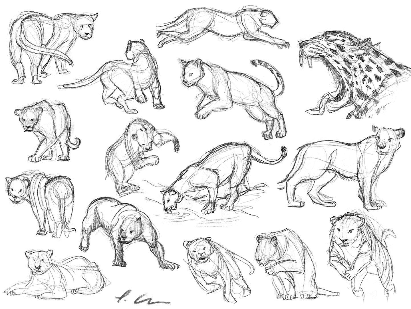 1440x1084 Big Cats' Gesture Drawings How To's And References!
