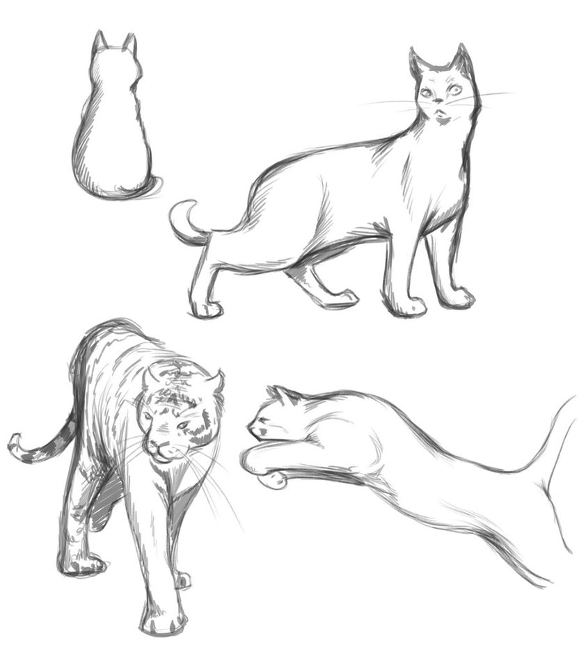 832x960 Cat Poses Study By Thilil