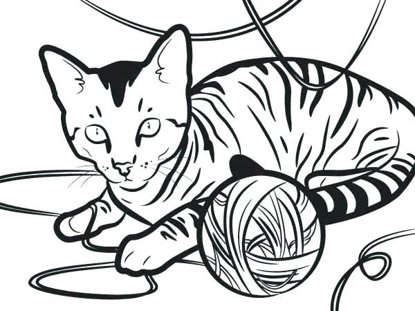 Cat Drawing Realistic at GetDrawings | Free download