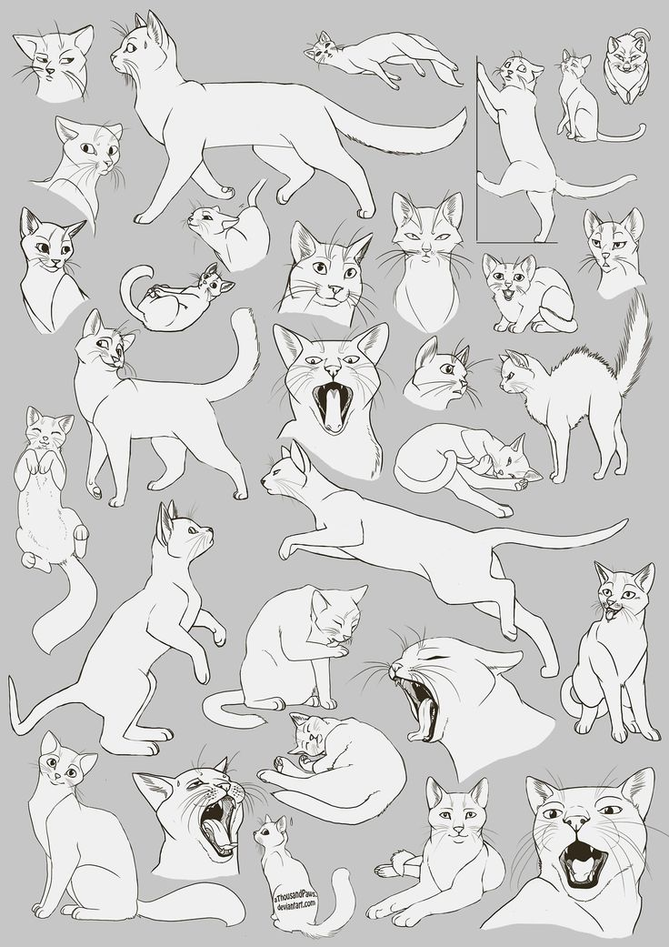 736x1041 Kitty Cat Drawing Art Cats Draw Kitten House Kitteh Feline Paws