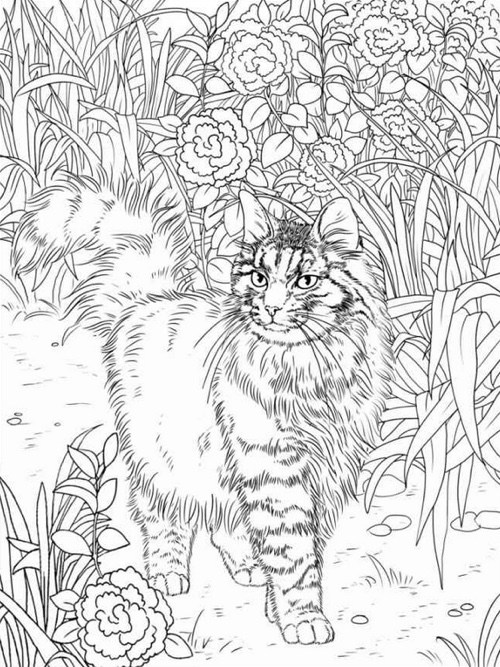 500x667 Best Coloring Books For Cat Website Inspiration Pages