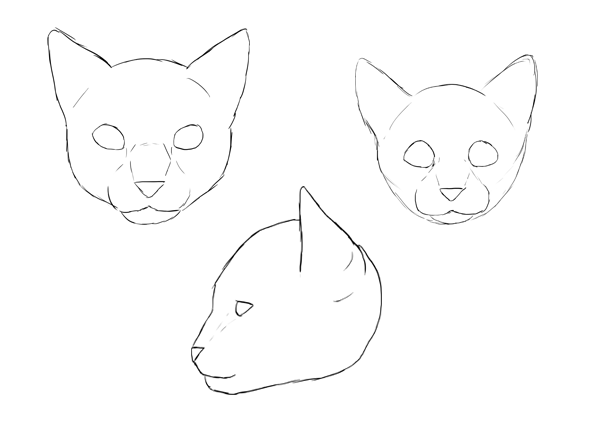 600x430 How To Draw Animals Cats And Their Anatomy