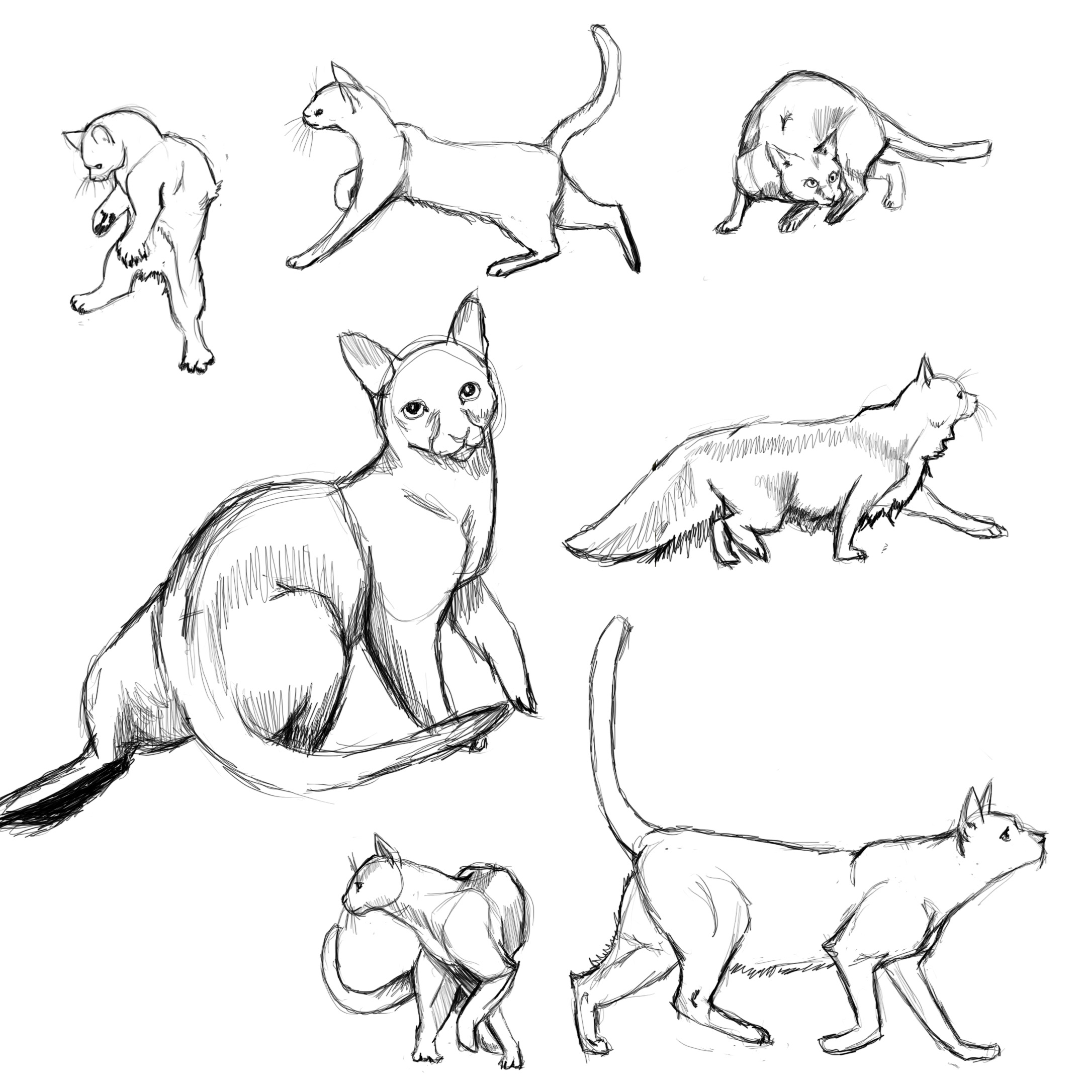 2160x2160 Cat Poses Study1 By Flamefoxe