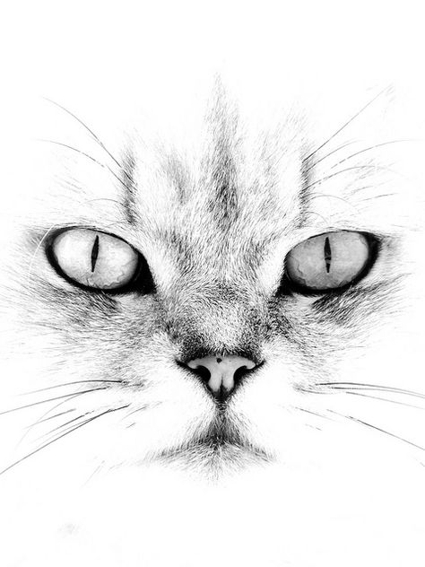 474x632 How To Draw Cat Eyes That Look Real Human Eye Drawing, Human Eye