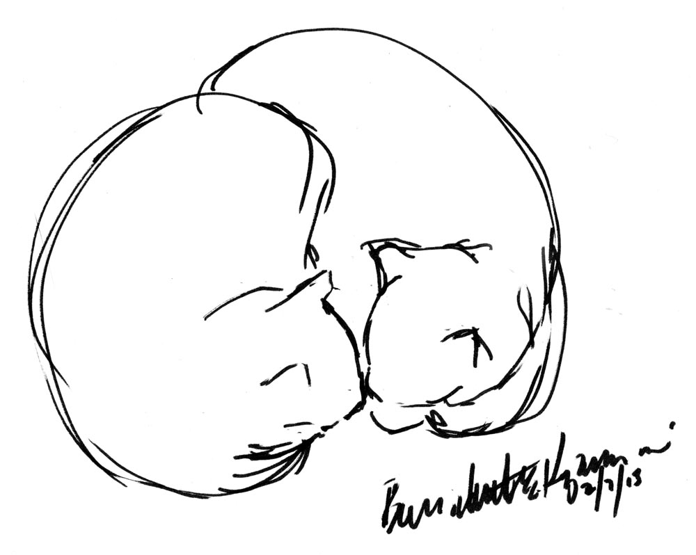 1000x798 Nose Simple Sketch Daily Sketch Nose To Nose ~ The Creative Cat
