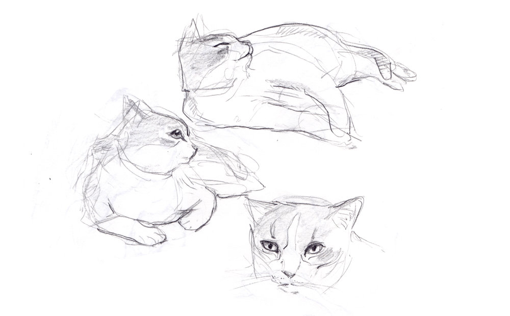 how to draw a cats nose