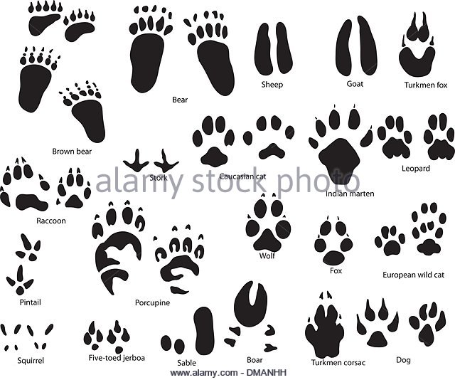 640x534 Paw Print Paint Stock Vector Images