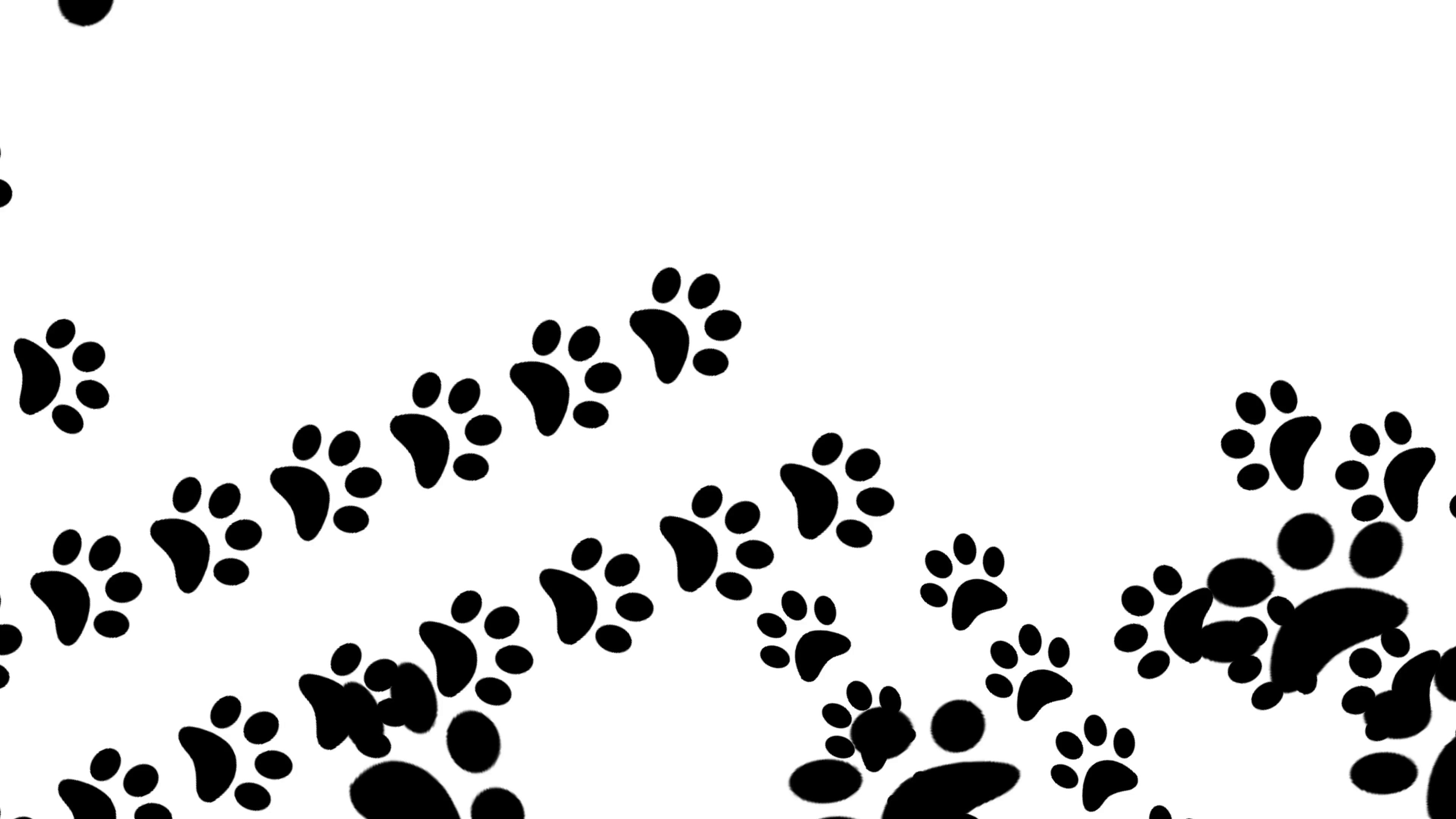 3840x2160 Paw Prints Animal Feet Foot Footprints Pawprints Dog Cat