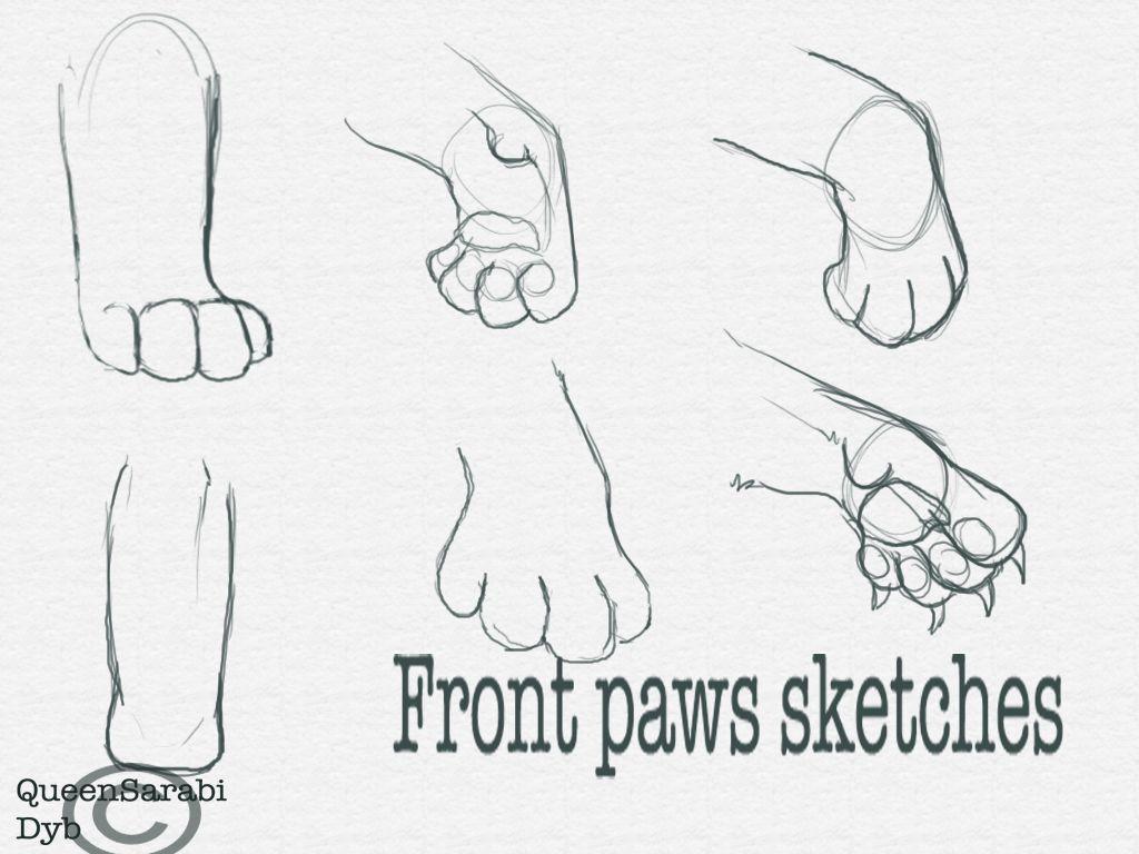 Fancy Cat Paws Anatomy Festooning - Human Anatomy Images ...