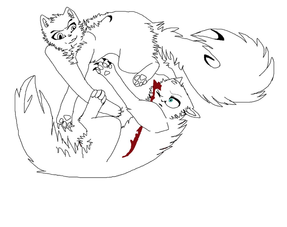 1004x796 Cats Fighting Drawing Cats Fighting Drawing Blood