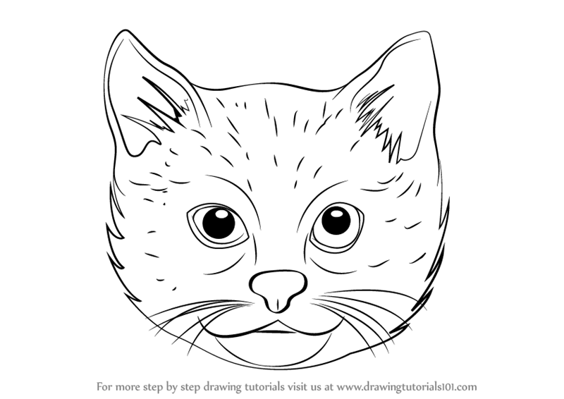 800x566 How Draw A Cat Face Easy Step By How