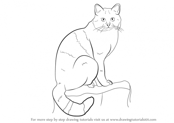 671x475 Coloring Pages How To Draw Wild Cats How To Draw Wild Cats Step