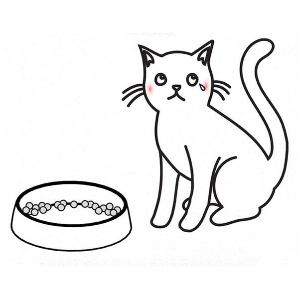 600x600 Dr. Catsby's Stainless Steel Anti Whisker Stress Cat Food Bowl