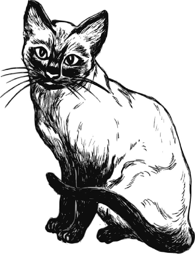 800x1044 Cat, Drawing, Sitting, Pet, Animal, Tail, Mammal