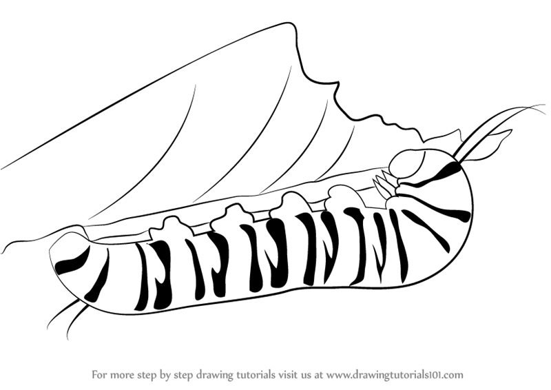 800x566 Learn How To Draw A Caterpillar (Insects) Step By Step Drawing