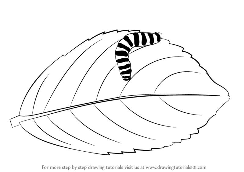 800x566 Learn How To Draw A Caterpillar On A Leaf (Insects) Step By Step
