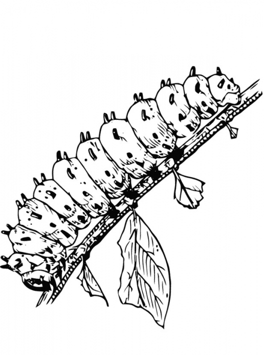 528x711 Caterpillar Coloring Page Amp Coloring Book