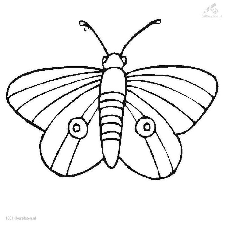Caterpillar To Butterfly Drawing