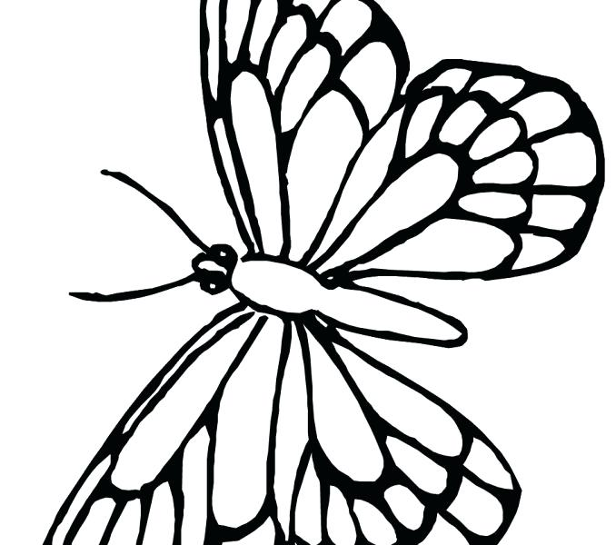 678x600 Monarch Butterfly Coloring Page For Butterfly 4 Monarch Butterfly