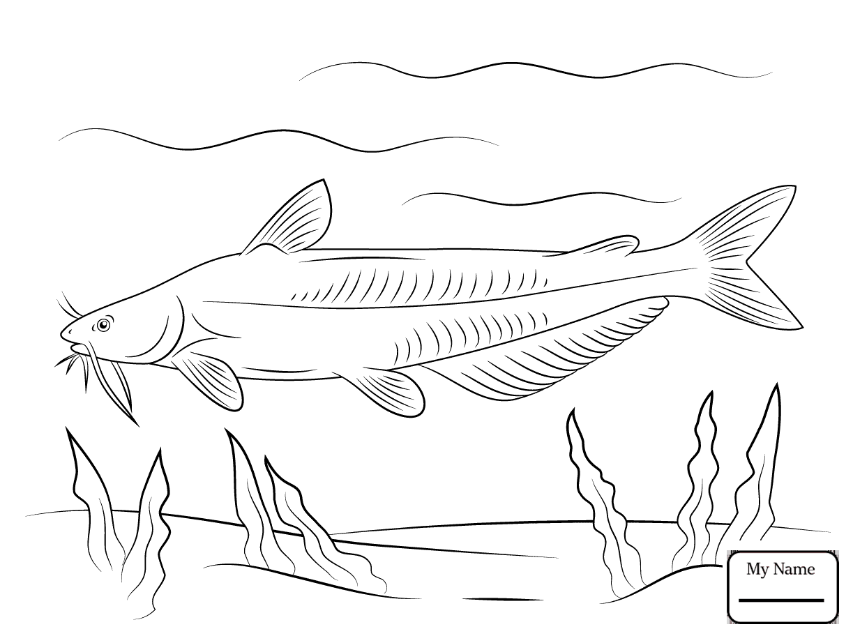 1223x912 Catfish Catfish 14 Fish Coloring Pages For Kids