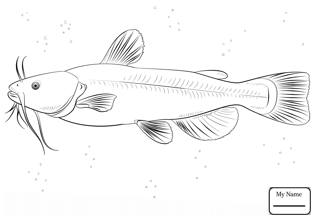 1210x840 Coloring Pages For Kids Catfish Catfish 24 Fish