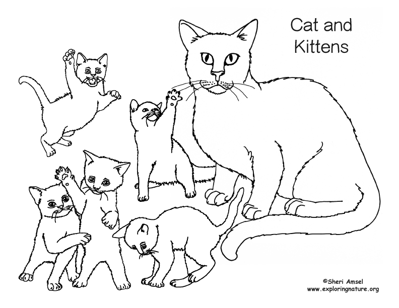 792x612 Cat And Kittens Coloring Page