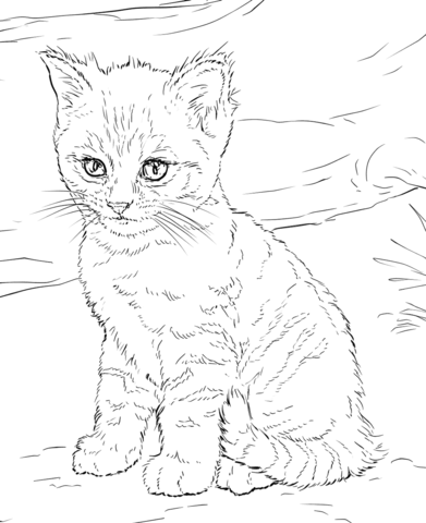 391x480 Cute Kitten Coloring Page Free Printable Coloring Pages