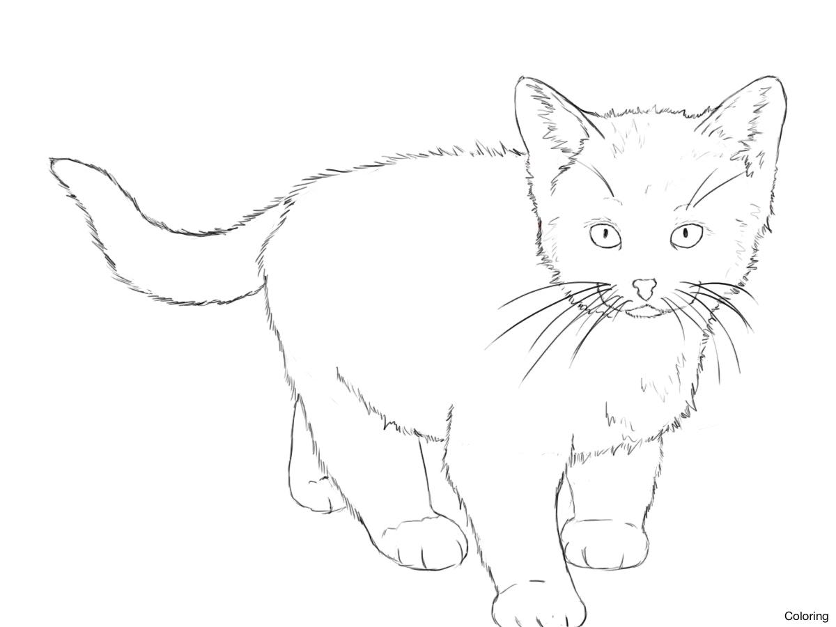 1200x900 Drawn Kitten Line Drawing 5 Drawings Of Kittens Coloring Pin 1 23f
