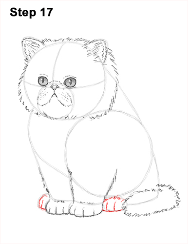 386x500 How To Draw A Kitten (Persian)