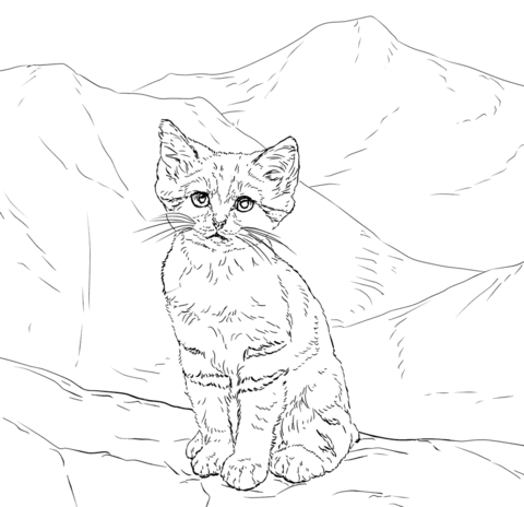 480x464 Sand Cat Kitten Coloring Page Free Printable Coloring Pages