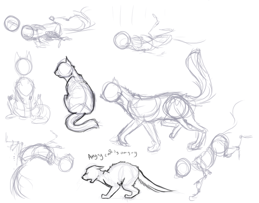 900x705 Kitty Poses Drawing References Pose, Kitten And Draw