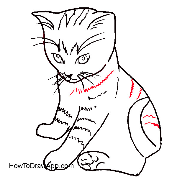 600x600 Crammed Cat Pictures For Kids How To Draw A Sitting Down Step By