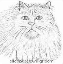 212x213 Easy Cat Drawings