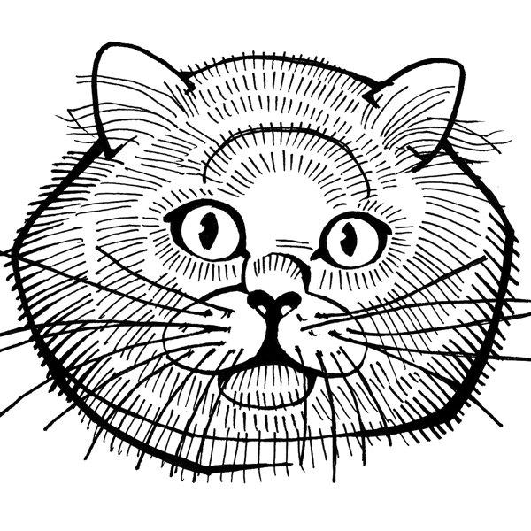 600x600 Siamese Cat Art Blue Eyes 4 X 6 Print Of Cat Drawing 4