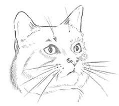 236x210 Image Result For Cat Face Drawings Cats Face