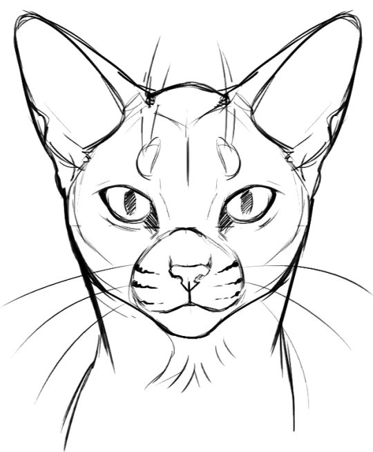 540x654 Warrior Cats Fanpage Cat Face Tutorial I Guess