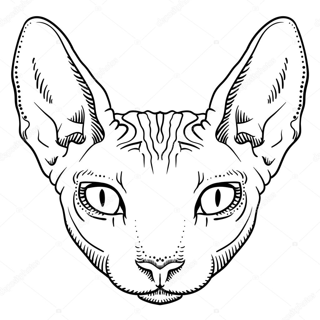 1024x1024 Hairless Sphinx Cat Face Graphics, Outline Stock Vector