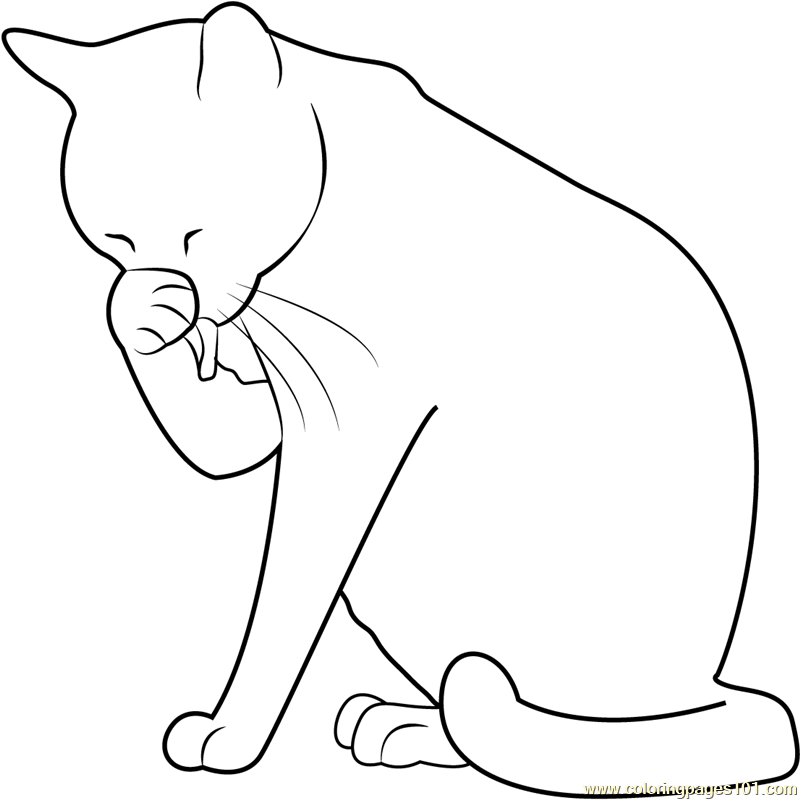 800x800 Cat Washing Her Face Coloring Page