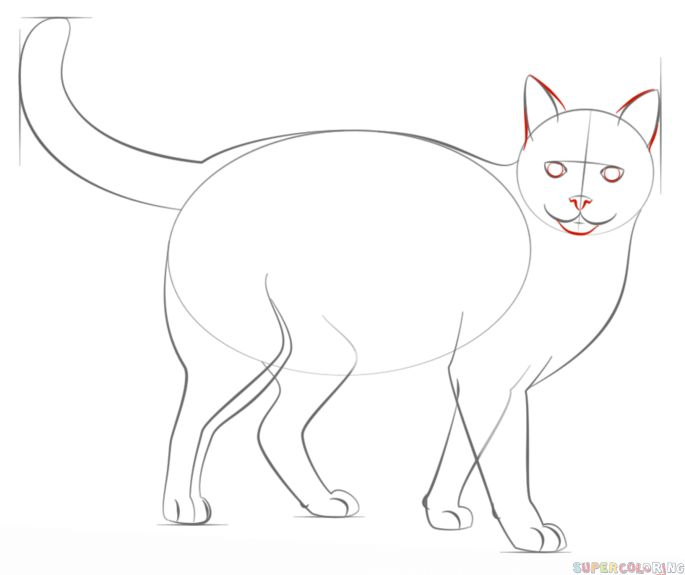 Cats Step By Step Drawing