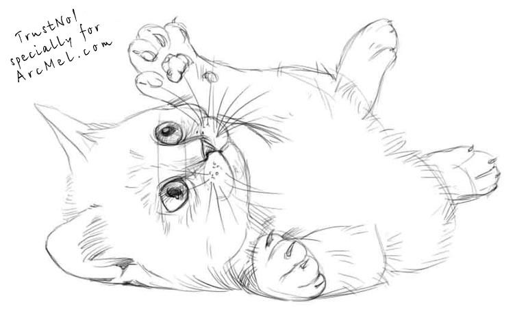 768x480 How To Draw A Kitten Step By Step