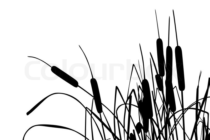 Cattail Drawing At Getdrawings Com Free For Personal Use