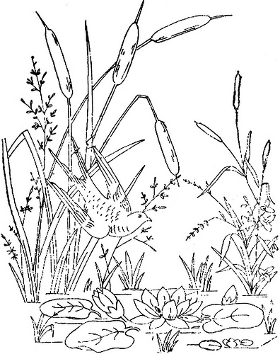 Cattails Drawing